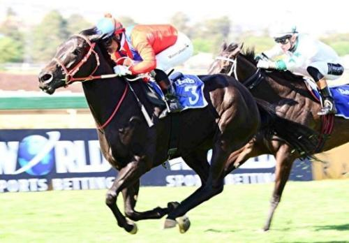 Thoroughbred Favour bred Sarve runs a super grade 2 race